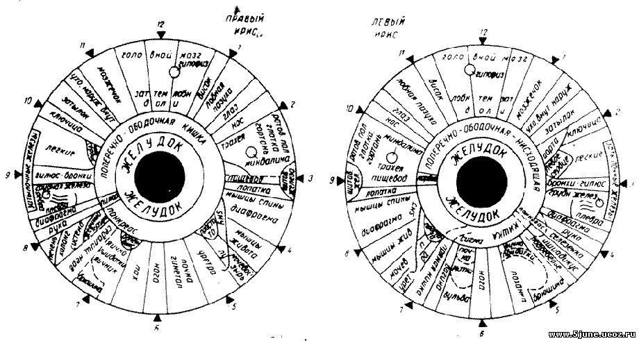 Иридодиагностика схема на радужной оболочке